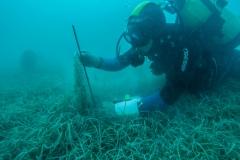 Istraživanje strukture populacije plemenite periskes u Malom jezeru